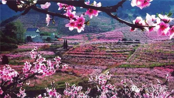 奉化赏花攻略大全,高速路线、公交专线、赏花景点全在这里!!!
